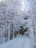 Beautiful snowy trees and way in winter, Lithuania Stock Photo