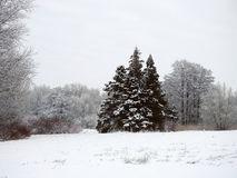 Beautiful snowy  trees , Lithuania Stock Photography