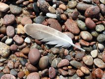 Birds feather on stones, Lithuania Stock Photo