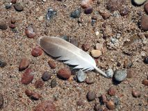 Birds feather on stones, Lithuania Royalty Free Stock Images