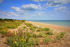 Nice wildflowers beach nature Kent England Royalty Free Stock Photo