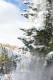 Nice winter. Falling snow from the fir tree branches Royalty Free Stock Photo