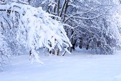 Nice Winter Background Stock Image