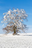 Nice winter landscape with tree and blue sky Stock Photo