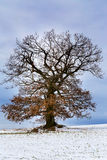 Nice winter landscape with tree Stock Image