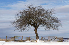 Nice winter landscape with tree Stock Photos