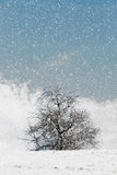 Nice winter landscape with trees Royalty Free Stock Photos