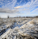 Nice winter meadow Royalty Free Stock Images