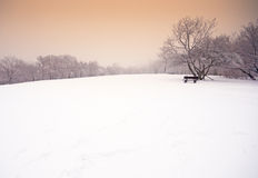 Nice winter photo Stock Image