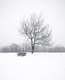 Nice winter photo Stock Photos