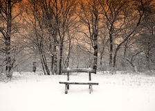 Nice winter photo Royalty Free Stock Photos