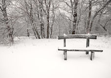 Nice winter photo Royalty Free Stock Photo