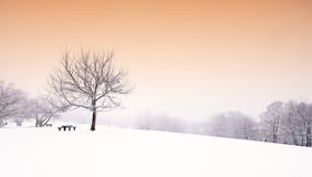 Nice winter scene Royalty Free Stock Image