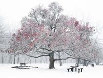 Nice winter scene Royalty Free Stock Photography