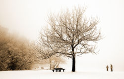 Nice winter scene Royalty Free Stock Images
