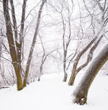 Nice winter scene Royalty Free Stock Photo