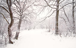 Nice winter scene Royalty Free Stock Photos