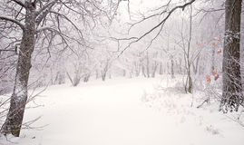 Nice winter scene Stock Images