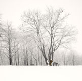 Nice winter scene Royalty Free Stock Photography
