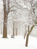 Nice winter scene Stock Images