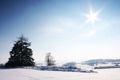Nice winter scenery Stock Photos