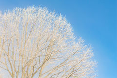 Nice winter weather scenery frosty morning Stock Photography