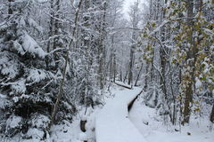 A Nice winterday in sweden Royalty Free Stock Photography