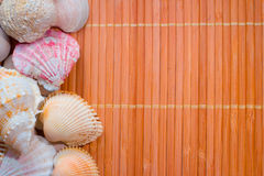 Nice wooden background with the colorful seashells Royalty Free Stock Photo