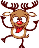 Nice Xmas Reindeer Making Funny Faces Royalty Free Stock Photography