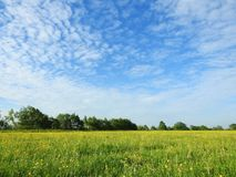 Beautiful spring  trees and field, Lithuania Royalty Free Stock Photography