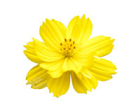 Nice yellow flower Royalty Free Stock Photos