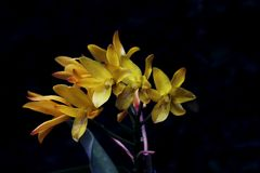 Nice Yellow orchid. This is a beautiful yellow orchid Stock Photo