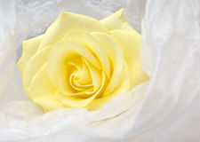Nice yellow rose in white satin. Nice yellow rose wrapped in white satin Stock Photography
