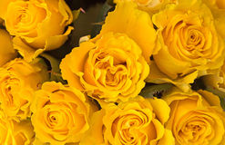 Nice - Yellow roses background. Background of bunch of yellow roses close up Royalty Free Stock Images