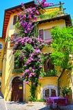 Nice yellow traditional Italian house beautiful plants decoration royalty free stock photo