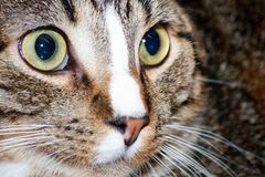 The cat from the roof. Nice, young cat looking smartly all around, close up portrait Stock Images