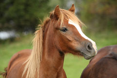 Free Nice Young Pony Royalty Free Stock Photography - 34107847