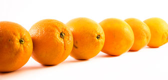 Nicely colored oranges on a white background - front and back lined next to each other.  Royalty Free Stock Photo