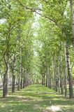 Nicely decorated rows of trees Stock Photography