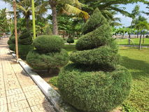 Nicely trimmed conifers. Beautifully manicured conifers, trees, shrubs, patterned, tapered cone, fluffy, there are palm trees, a bright Sunny photo from vacation Stock Images
