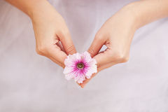 Nicety. Petunia flower in female hand Stock Images