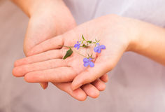 Nicety. Blue flower in female hand Royalty Free Stock Images