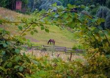 Niché dans les buissons, un cheval Image libre de droits