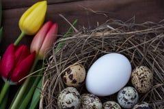 Nichez avec des oeufs d'oiseau et vivez des tulipes de Pâques Photo libre de droits
