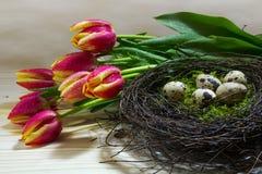 Nichez avec des oeufs de caille et des tulipes jaunes rouges fraîches comme Pâques ou s Photographie stock libre de droits