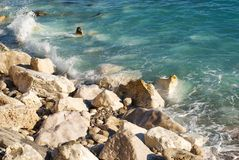 Nicht ein sandiger Strand Stockbilder
