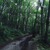 Nicht erforschter Wald Stockbilder