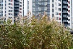 Nicht gemähtes grünes Gras vor einem modernen Haus Stockfotografie