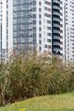 Nicht gemähtes grünes Gras vor einem modernen Haus Stockbild