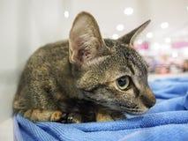Nicht identifizierte Katze im Käfig finden ein neues Haus Stockfotografie